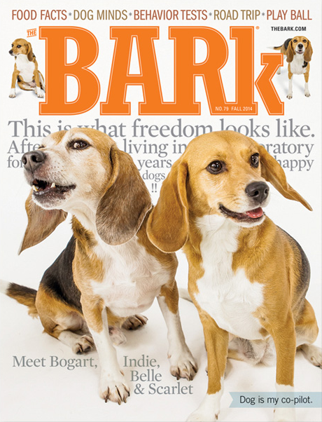 The Bark magazine subscription deal