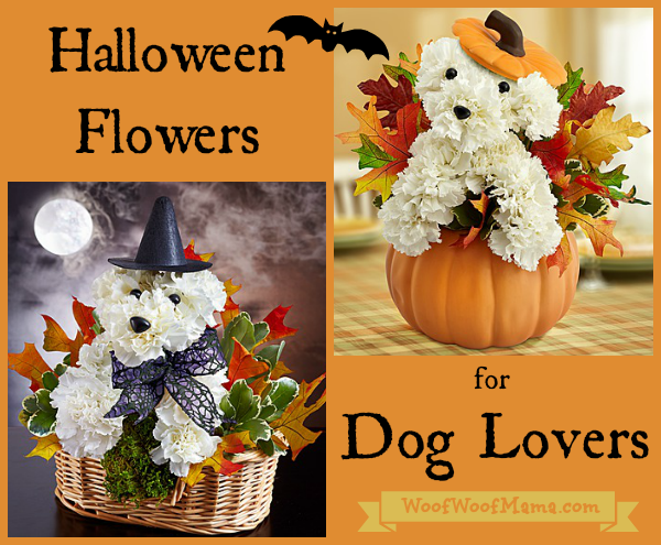 halloween flowers dog lovers