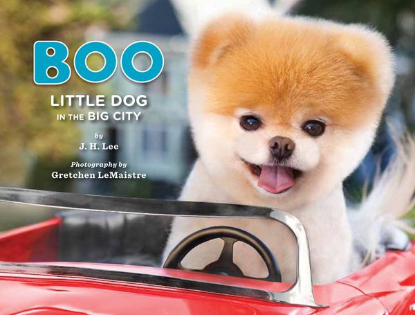 boo little dog