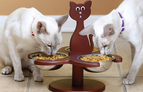 cute cat feeder
