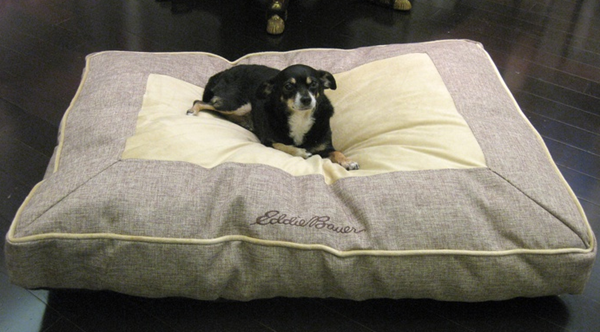 eddie bauer dog bed
