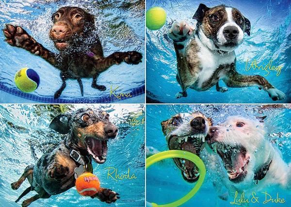 uderwater dogs puzzle