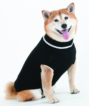 black dog sweater