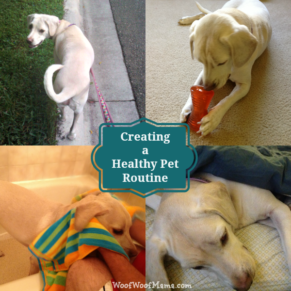 healthy pet routine
