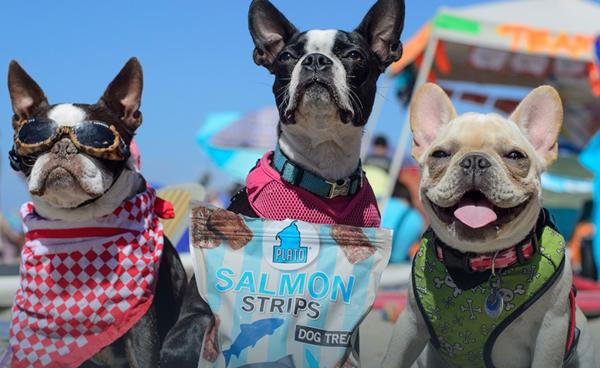 plato beach dogs