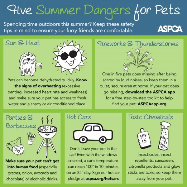 summer pet info