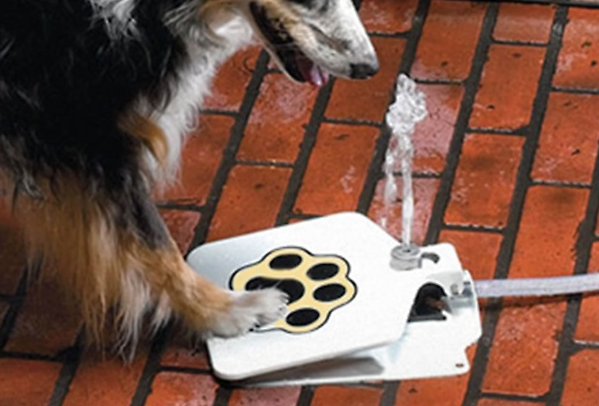 step activated pet fountain