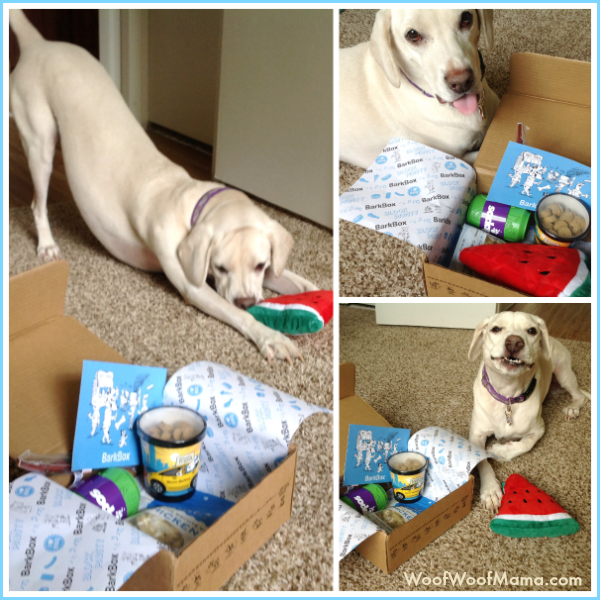 august barkbox code