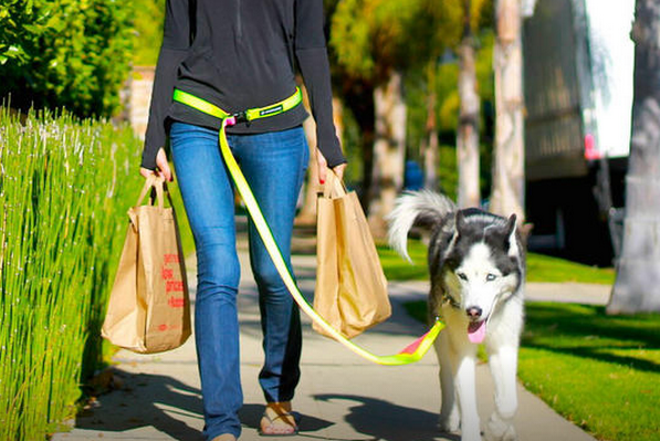 handsfree pet leash
