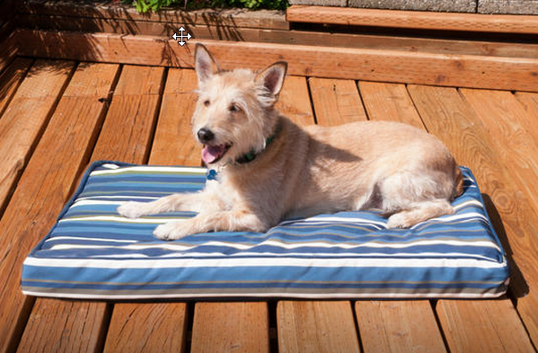 outdoor pet bed