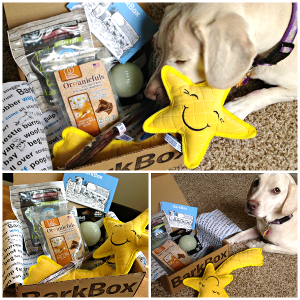 September BarkBox Collage