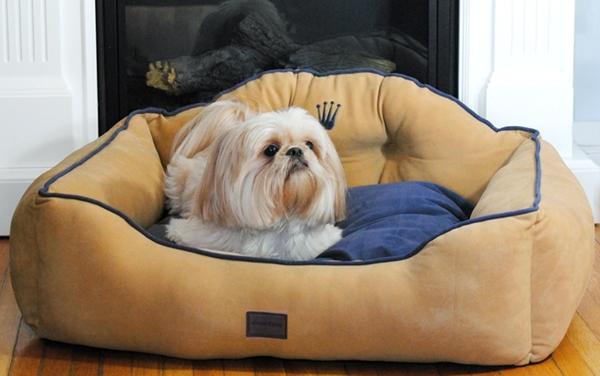 crown pet bed