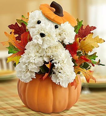 pumpkin-halloween-dog-flowers