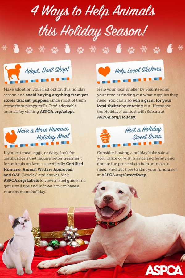 ASPCA holiday info