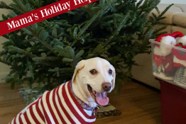 4 Ways to Help Animals + Enter to WIN an ASPCA Holiday Gift Pack!