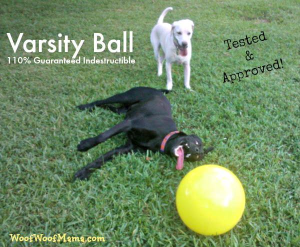 Unbreakable Dog Toy Varsity Ball Daisy