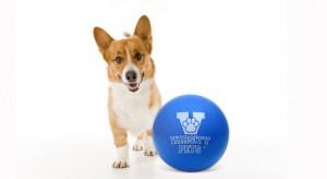 Varsity Ball Junior