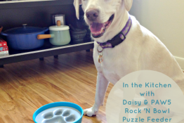 In the Kitchen with Daisy and PAW5 Rock 'N Bowl Puzzle Feeder Dog Bowl