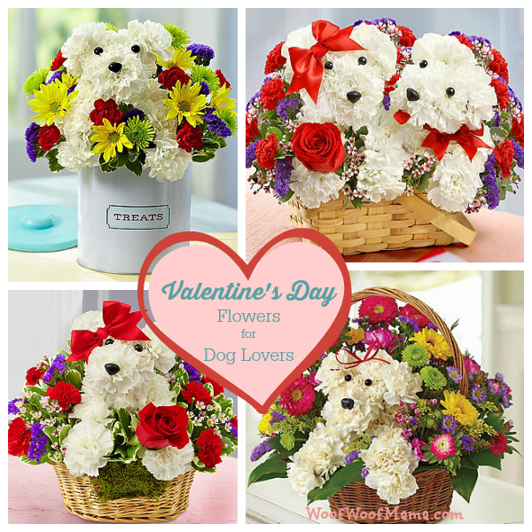 Valentines Day Flowers for Dog Lovers