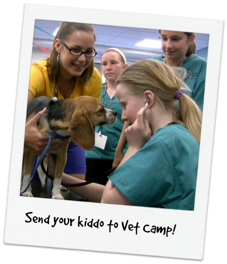 Vet Camp for Kids