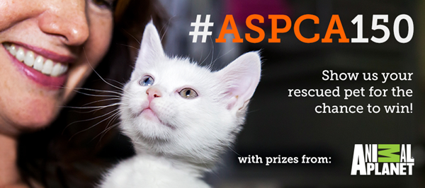 ASPCA photo contest