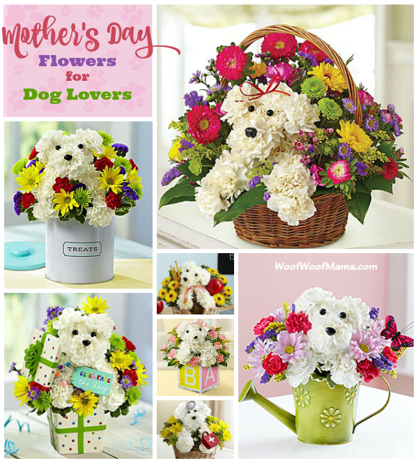 Mothers Day Flowers for Dog Lovers