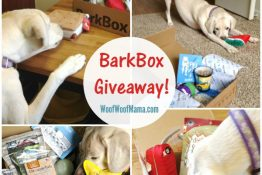 Celebrate Summer with a BarkBox Giveaway! {6 Winners}