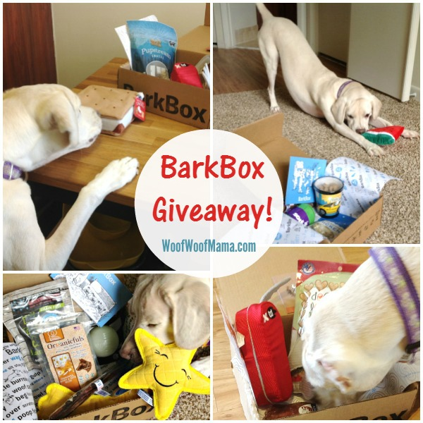 Daisy BarkBox Giveaway