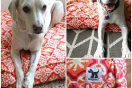 Molly Mutt DIY Dog Bed Review + Giveaway