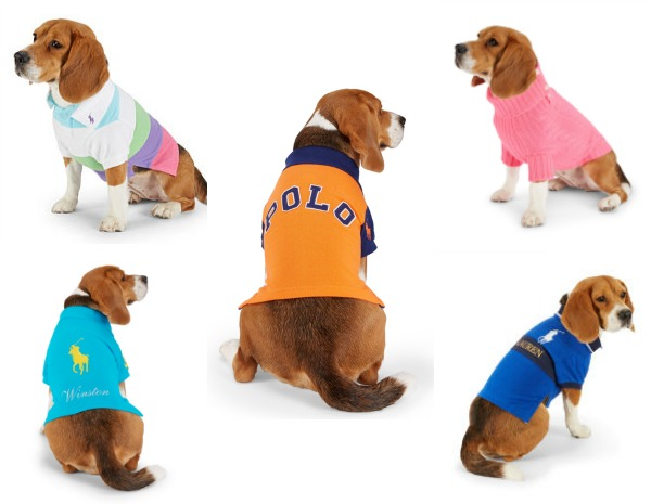 Dogs in Polo Shirts