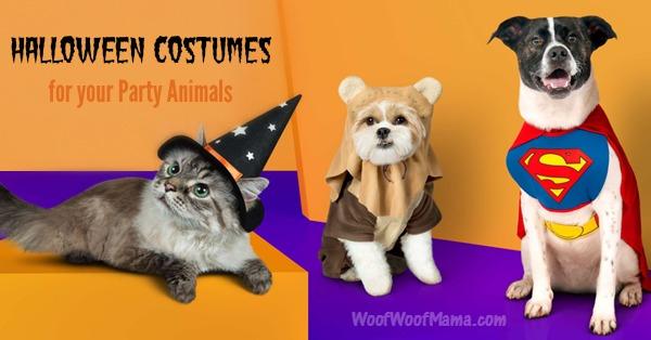 target-halloween-pets