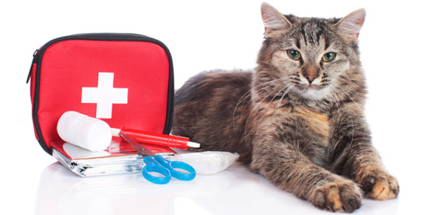 pet-emergency-kit-cats-dogs
