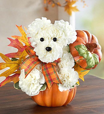 halloween-dog-flowers-2016