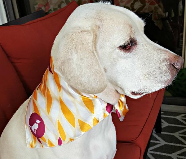 sep16-scarf-daisy