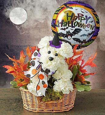 witch-dog-halloween