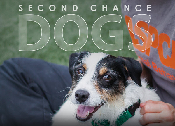 second-chance-dogs