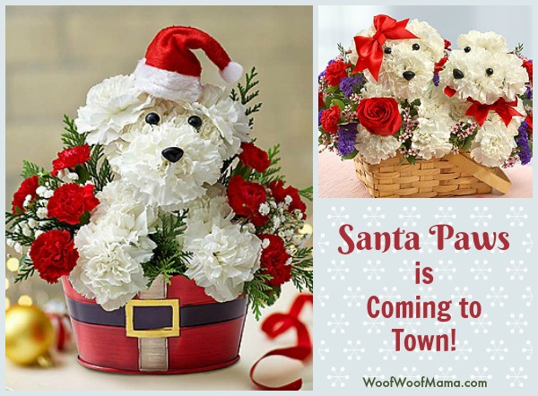 santa-paws-christmas-dog-flowers