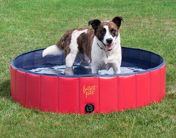 HOT Deal on a Cool Swimming Pool Made Especially for Dogs | Woof ...