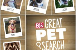 Vote for Your Favorite Dog #BJsGreatPetSearch
