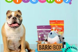 BarkBox Giveaway ~ Three Lucky Dogs Win!