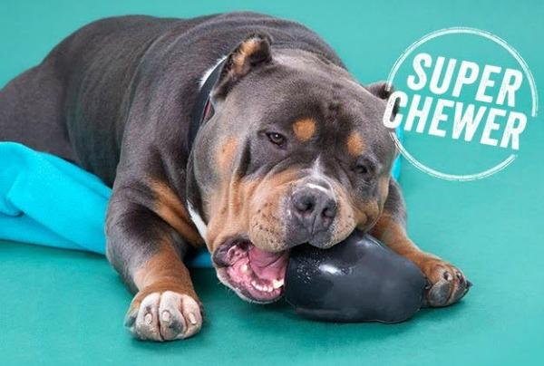 Tough Dog Toys Subscription