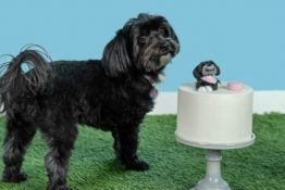 How to Make Cake Toppers That Look Like Your Dog + KitchenAid Giveaway