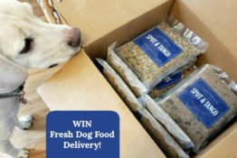 Spot and Tango Dog Food Giveaway