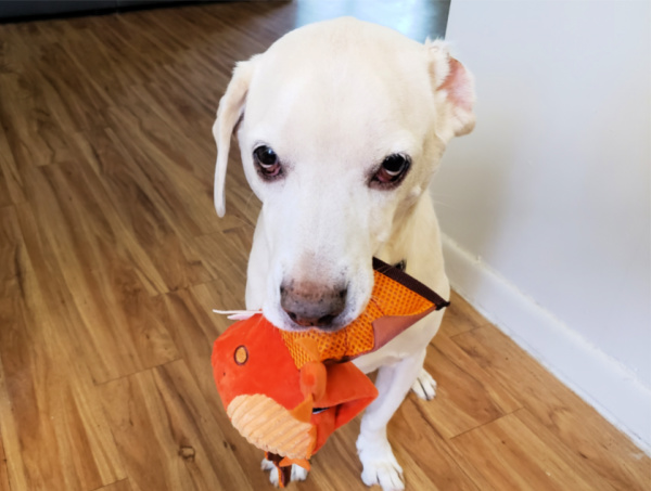 Daisy May Super Chewer Box Review with Dragon Dog Toy