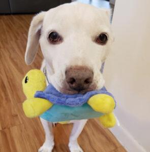Turtle Dog Toy