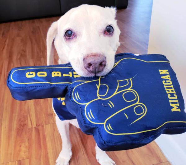 Daisy Dog with Michigan Football Foam Finger Dog Toy