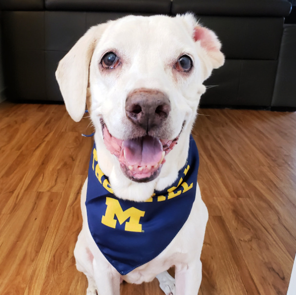 NCAA Football Dog Bandana